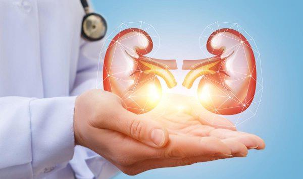 Artificial Kidneys: How It Benefits Us