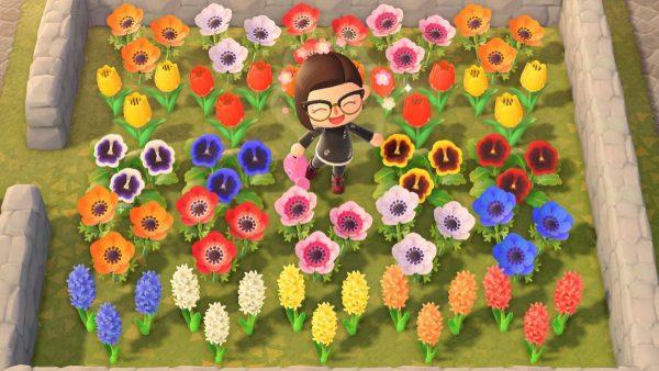 Animal Crossing Creating Hybrid Flowers