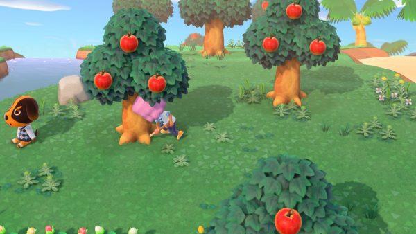 Animal Crossing Planting Fruits