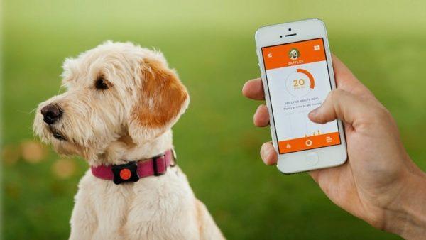 Best GPS Collar with Phone App