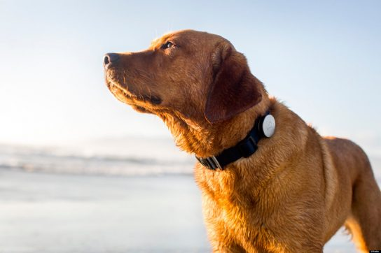 10 Best GPS Dog Collar Models to Keep Your Pet Safe