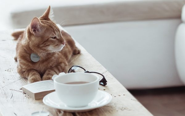 Cat with Teacup