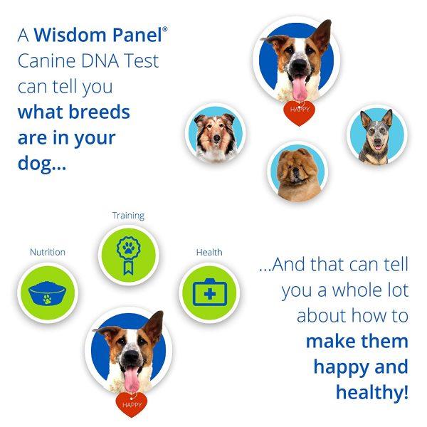 Wisdom Panel Dog DNA Results