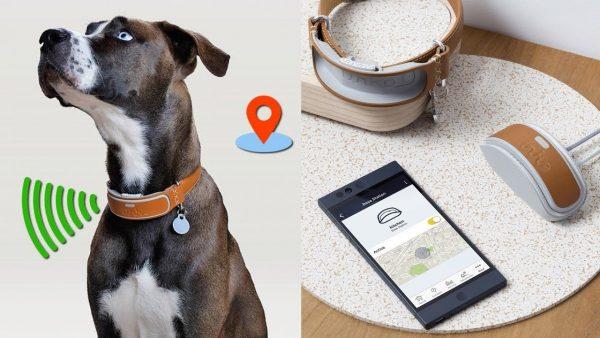 How Do GPS Dog Collars Work
