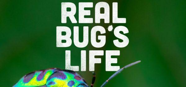 Real Bug's Life