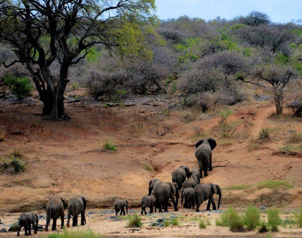 Family Tree Elephants