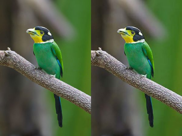 before and after compression