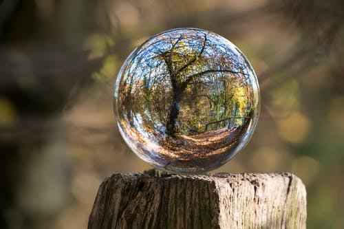 Reflection of Tree on Transparent Globe
