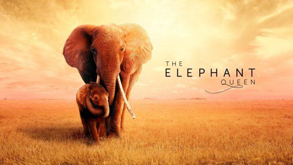 Apple TV Plus movie: The Elephant Queen
