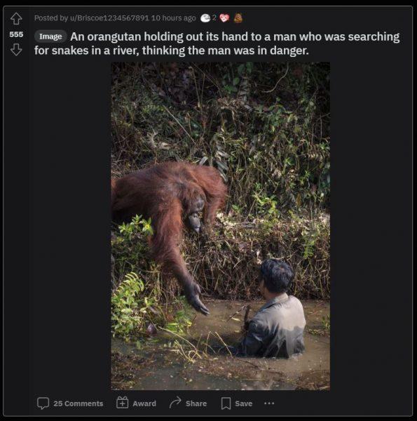 Damnthatsinteresting subreddit